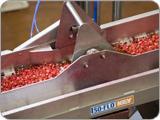 Key's Iso-Flo® Vibratory Conveyor